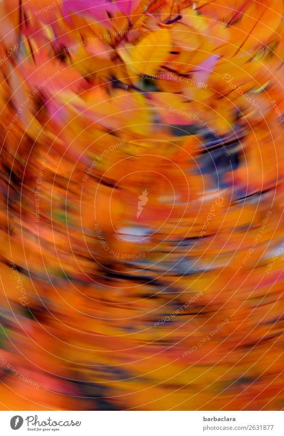 Ein Wirbelwind fegt die Blätter vom Baum geschwind Natur Pflanze Herbst Klima Wind Sträucher Blatt Zweige u. Äste Park drehen leuchten mehrfarbig gold Stimmung