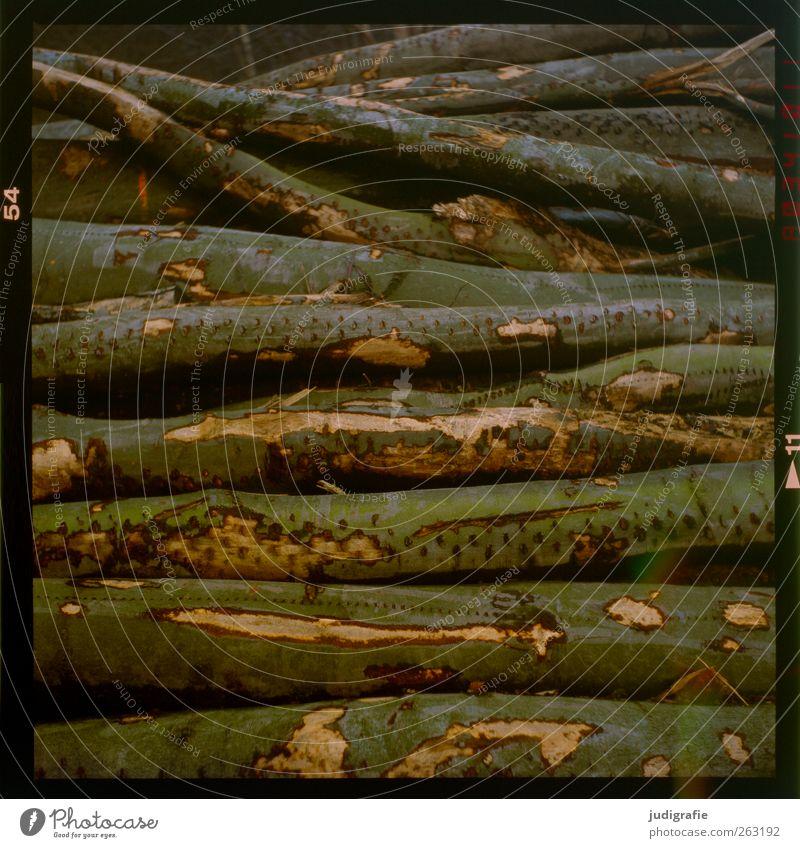 1700 | 'ne Menge Holz Natur Wald Umwelt Tod Holz liegen kaputt trocken Landwirtschaft Forstwirtschaft Baumrinde fällen