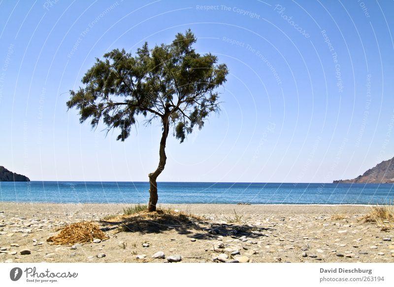 Alleinstehend Natur blau Ferien & Urlaub & Reisen grün Baum Sommer Meer Strand Einsamkeit Erholung Ferne Landschaft Freiheit Küste Sand Horizont