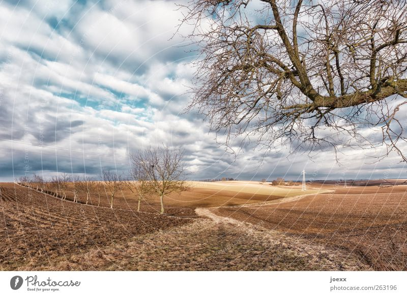 Feldweg Landschaft Erde Himmel Wolken Frühling Winter Schönes Wetter Baum Wege & Pfade alt blau braun weiß Idylle ruhig Farbfoto mehrfarbig Außenaufnahme