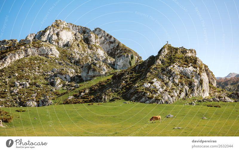 Klettergerüst Natur : Fotos zu klettergerüst