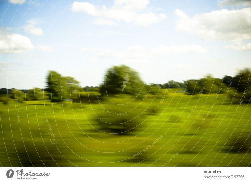 fast german summer II Himmel Natur blau grün Baum Pflanze Sommer Tier Wolken Ferne Umwelt Landschaft Wege & Pfade Garten Luft Feld