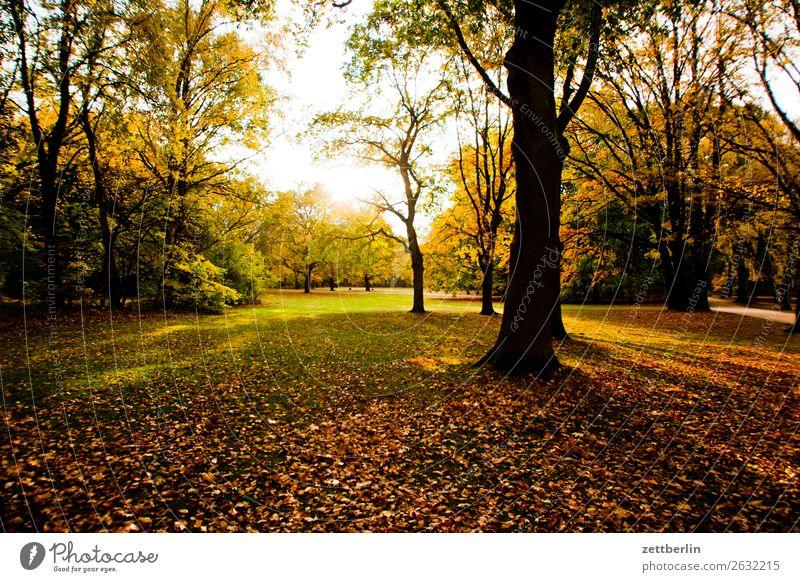 Ferien & Urlaub & Reisen Natur Pflanze Sonne Baum Erholung Blatt ruhig Herbst Wiese Berlin Gras Textfreiraum Park Sträucher Ast