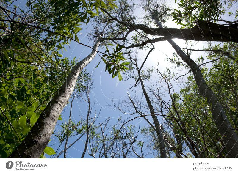 Himmel blau grün Baum Sonne Sommer Wald Park Aussicht