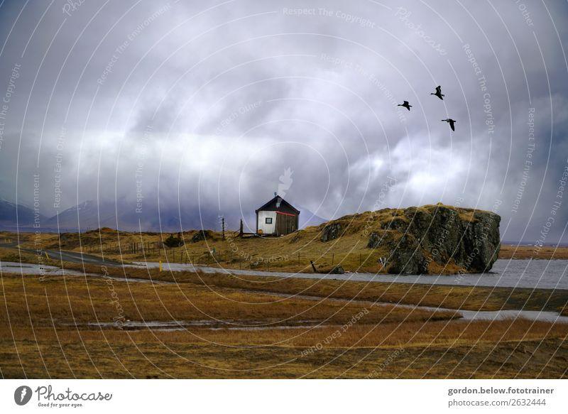 Islands Weiten blau grün weiß Meer Haus Tier Fenster Berge u. Gebirge schwarz Herbst gelb Wand Gefühle Mauer Stein orange