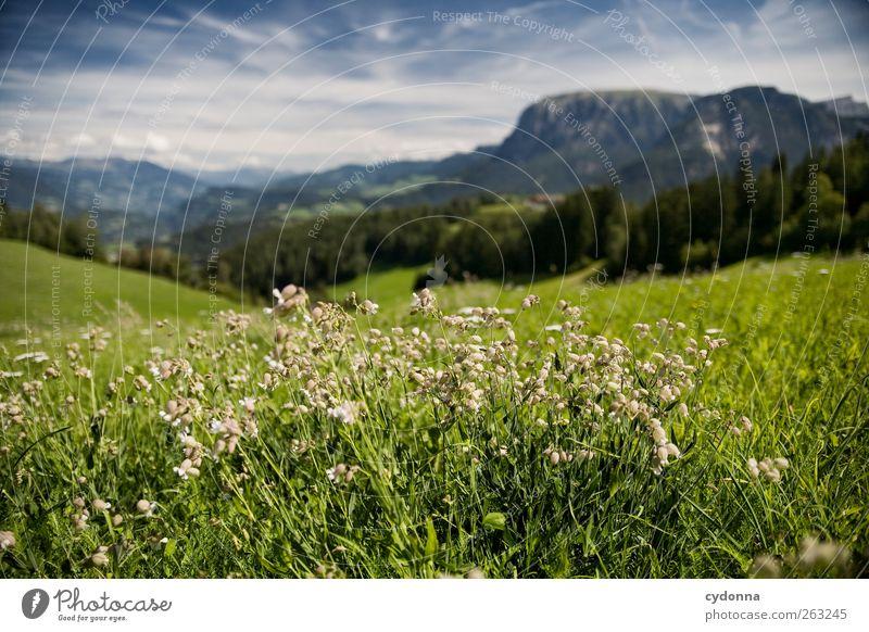 Traumlandschaft Natur Ferien & Urlaub & Reisen Sommer Blume ruhig Ferne Erholung Umwelt Landschaft Wiese Berge u. Gebirge Freiheit Gras Horizont Ausflug