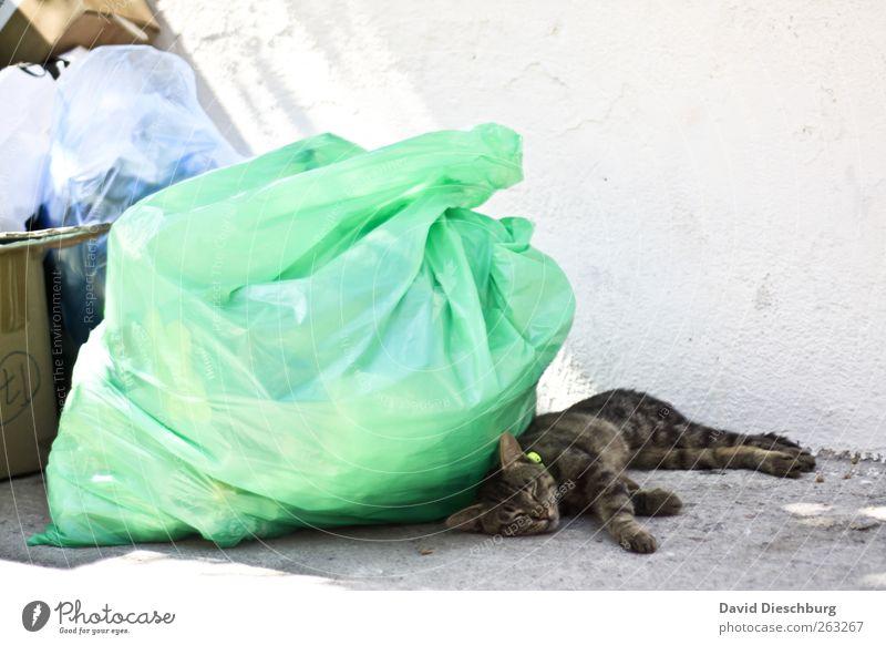 Im Katzentraumland Tier Haustier 1 braun grün weiß schlafen liegen Pause Erholung Müll Müllsack Wand ruhend geschlossene Augen Mittagspause Mittagsschlaf