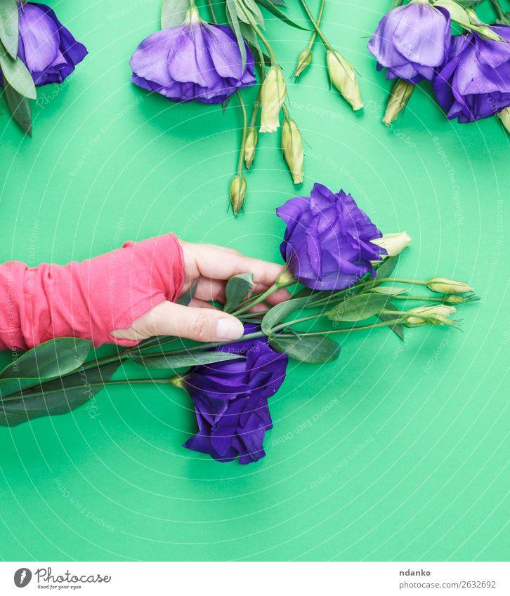 weibliche Hand in einem rosa Pullover mit einem Blumenzweig schön Haut Frau Erwachsene Natur Pflanze Blatt Blüte Mode Blumenstrauß frisch natürlich oben weich