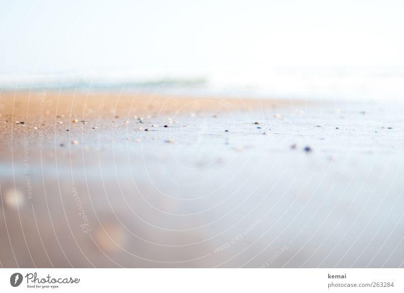 Von Steinen verfolgt ruhig Ferien & Urlaub & Reisen Ferne Sommer Sommerurlaub Strand Meer Sandstrand Muschelschale hell nass leer Einsamkeit Farbfoto