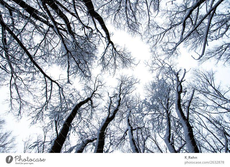 """verschneite Baumkronen Umwelt Natur Landschaft Pflanze Himmel Winter Schnee kalt """"Ast aufwärts ,baumkrone bewaldet draußen ,erkältung glaube gott gross herbst"""