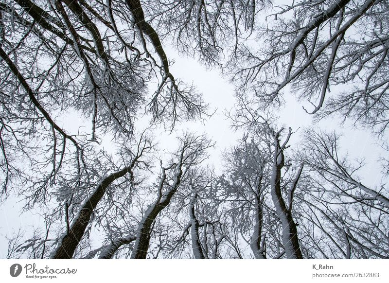 """verschneite Baumkronen Umwelt Natur Landschaft Pflanze Himmel Eis Frost Schnee Park Wald kalt Umweltschutz """"Ast aufwärts ,baumkrone bewaldet draußen ,erkältung"""