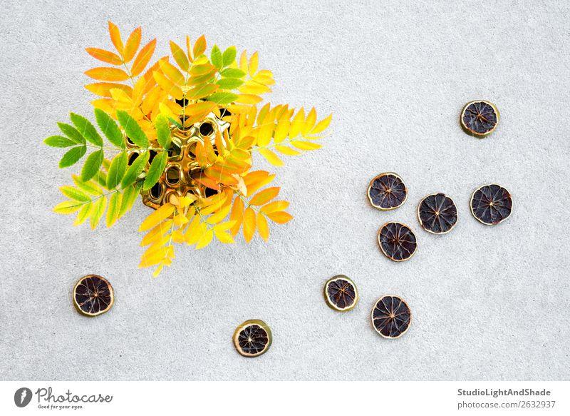 Aschebaumblätter in einer Vase und getrocknete Zitronenscheiben Frucht schön Kunst Natur Herbst Baum Blatt Beton hell natürlich gelb gold grau grün Farbe