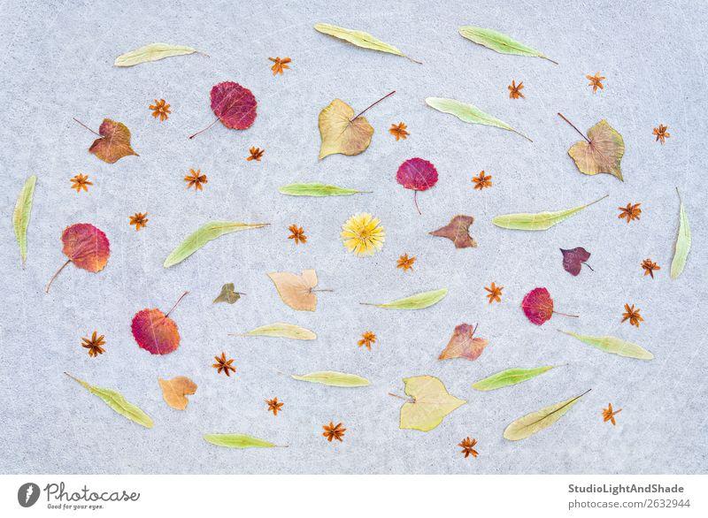 Herbstblätter und Trockenblumen auf Betonuntergrund schön Garten Natur Landschaft Wetter Wind Blume Blatt Terrasse alt natürlich gelb grün rot Stimmung Farbe
