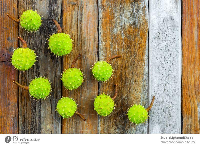 Grüne Kastanien auf rustikalem Holzgrund schön Sommer Natur Pflanze Baum Wald Sammlung alt natürlich retro stachelig braun grün Farbe orange Muttern Stachel