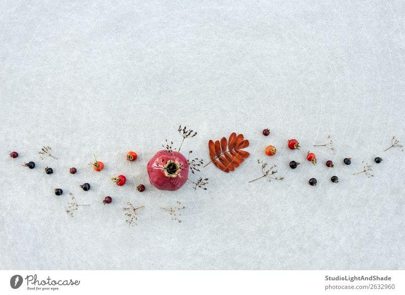 Herbstdekor mit Keramikvase und Trockenpflanzen Frucht elegant Design schön Natur Pflanze Baum Blatt Wald Beton Linie dunkel natürlich wild braun grau rot Tod