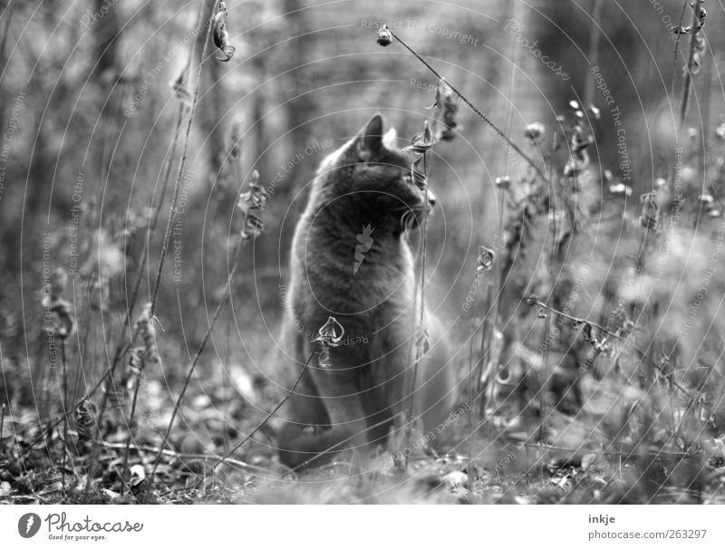 Camouflage cat Katze Natur Pflanze Blume Tier ruhig Leben Wiese Herbst Gefühle Garten Stimmung Tierjunges sitzen warten Sträucher