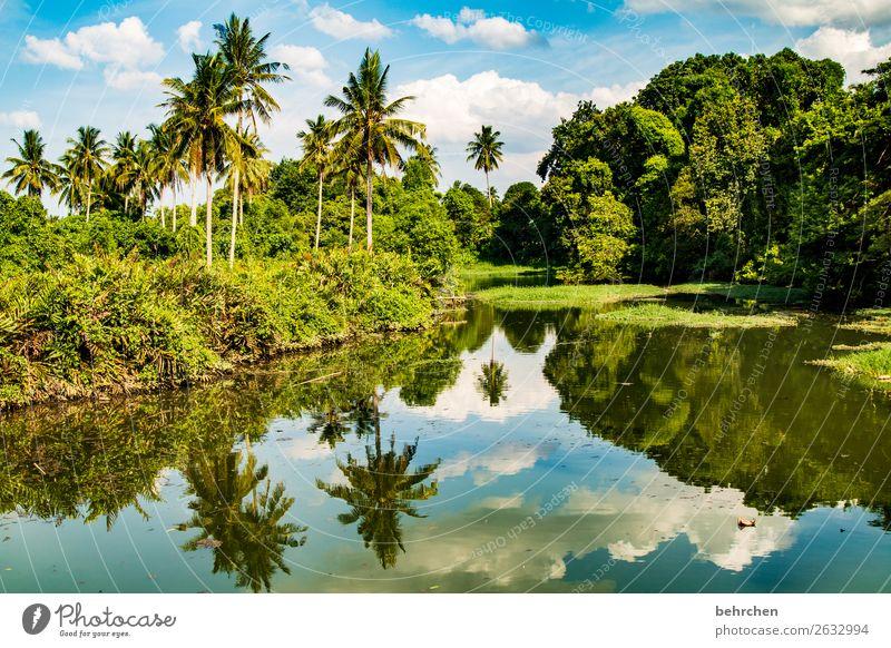 wir sind das klima| corona thoughts Kontrast Licht Tag Außenaufnahme Farbfoto Malaysia Fluss Urwald Wasser Landschaft Natur Ferien & Urlaub & Reisen Tourismus