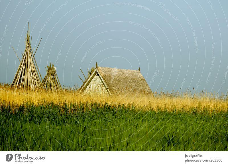 Am Bodden Umwelt Natur Landschaft Himmel Sommer Gras Küste Seeufer Vorpommersche Boddenlandschaft Haus Hütte Bauwerk Dach klein grün Erholung ruhig Schilfrohr