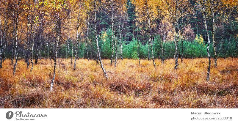 Herbstlicher Waldpanorama-Blick. Umwelt Natur Landschaft Pflanze Klima Klimawandel Wetter Nebel Regen Baum Sträucher Moos Grünpflanze natürlich gelb grün orange
