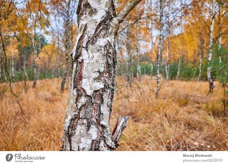 Natur Pflanze Landschaft Baum Einsamkeit ruhig Wald Herbst gelb Umwelt natürlich Traurigkeit Wetter Aussicht Fotografie Jahreszeiten