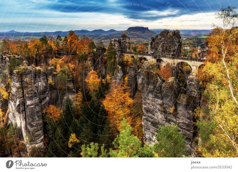 Elbe. Sand. Stein. Natur Landschaft Herbst Schönes Wetter Wald Berge u. Gebirge Mauer Wand Sehenswürdigkeit Basteibrücke hoch blau braun mehrfarbig gelb grün
