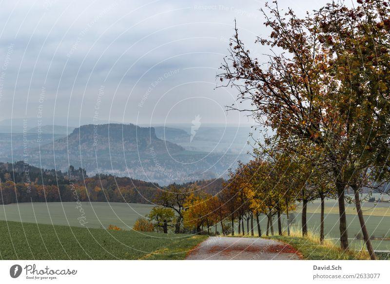 Lilienstein Ferien & Urlaub & Reisen Tourismus Berge u. Gebirge wandern Herbsturlaub Natur Landschaft Wetter Baum Hügel blau braun mehrfarbig gelb grün