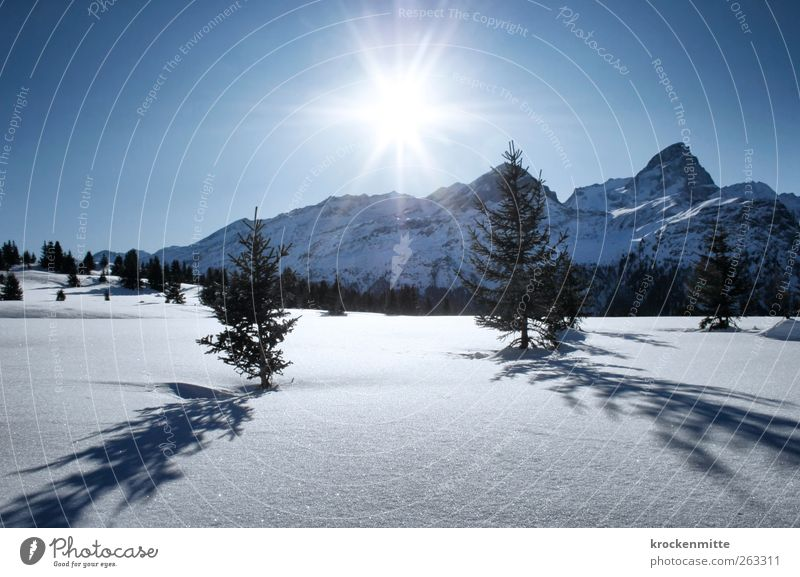 Ein Tag im Schnee Himmel Natur blau Baum Pflanze Sonne Winter Umwelt Landschaft Schnee Berge u. Gebirge leuchten Alpen Schönes Wetter Gipfel Schweiz