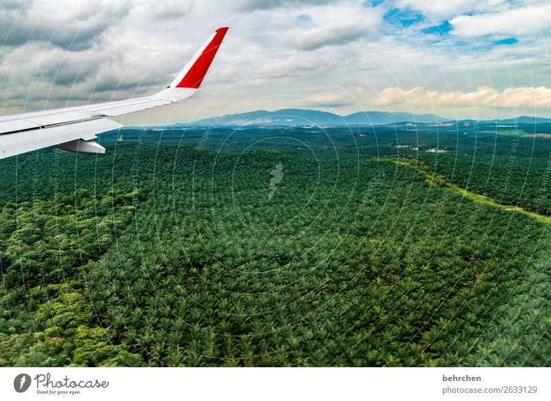 (negativ)verwandlung | aus regenwald wird palmöl Ferien & Urlaub & Reisen Natur Pflanze grün Landschaft Baum Wald Ferne Tourismus Freiheit Denken Ausflug