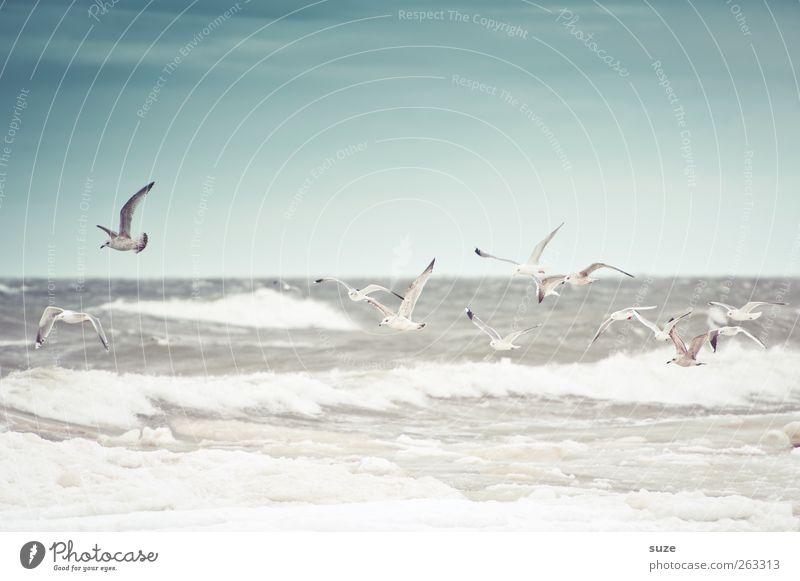 Stürmische See Meer Wellen Umwelt Natur Tier Urelemente Luft Wasser Himmel Horizont Winter Klima Wetter Wind Sturm Küste Ostsee Wildtier Vogel Silbermöwe