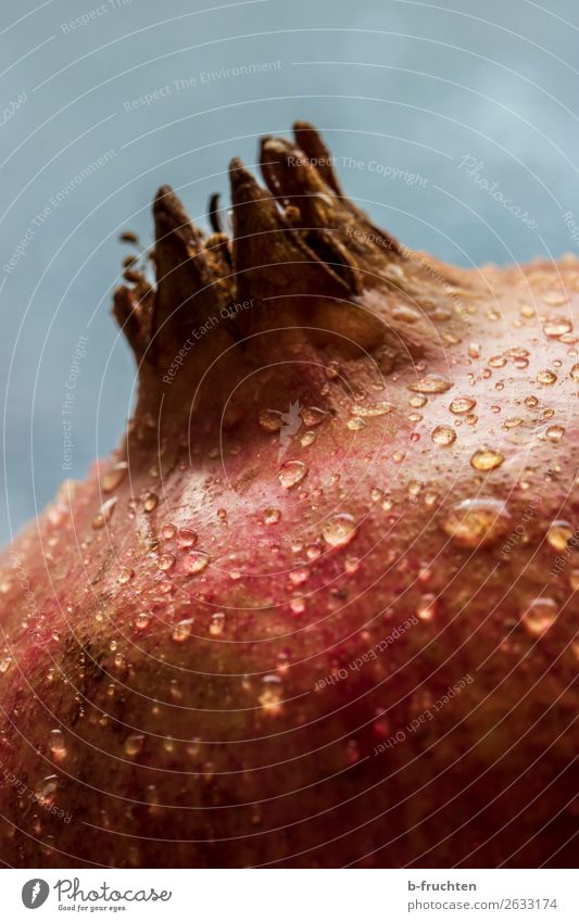 Granatapfel mit Wassertropfen - Nahaufnahme Lebensmittel Frucht Bioprodukte Vegetarische Ernährung Diät Gesunde Ernährung genießen frisch Gesundheit rund saftig
