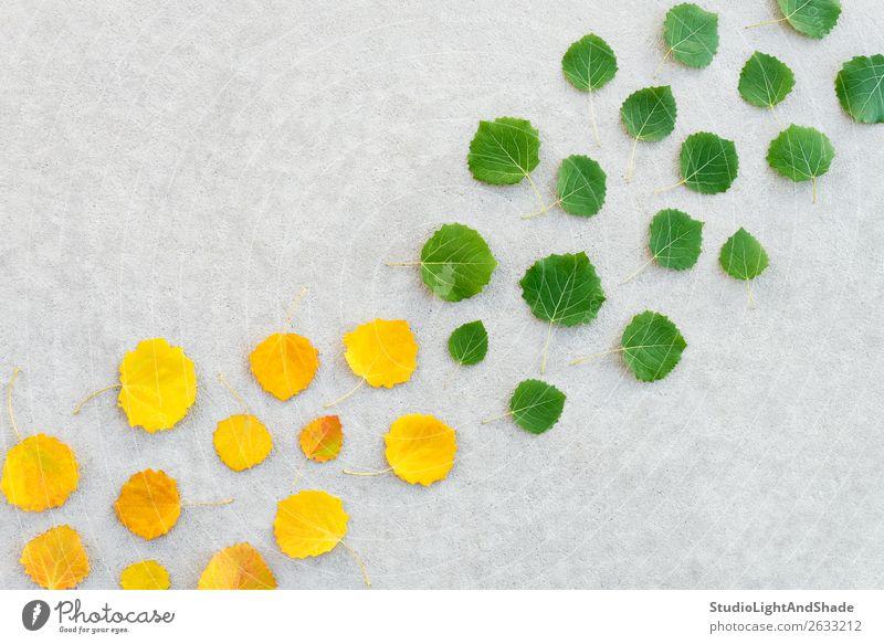 Grüne Blätter werden gelb schön Sommer Natur Pflanze Herbst Wetter Baum Blatt Wald Wege & Pfade Beton Linie alt hell natürlich gold grün Farbe Inspiration
