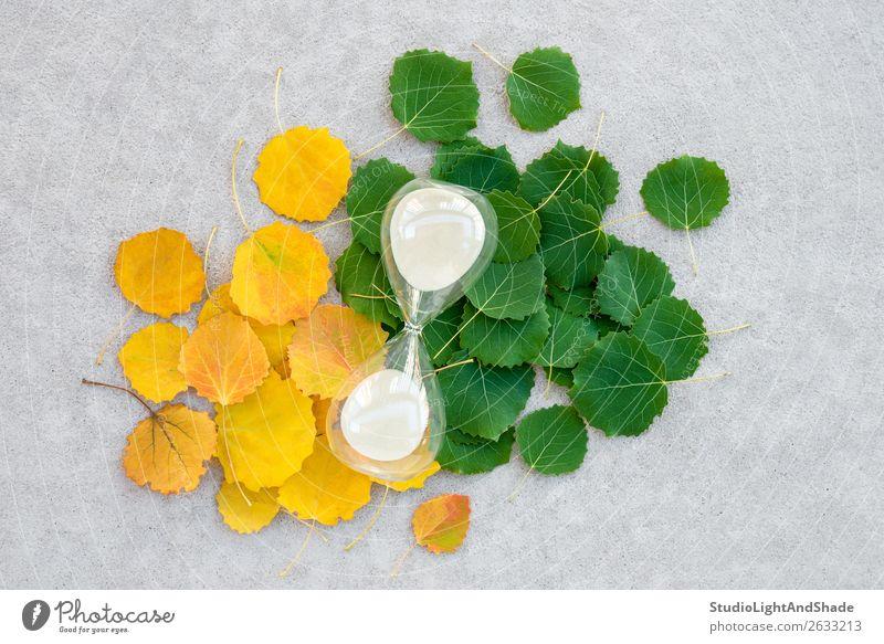 Sanduhr an Sommer- und Herbstblättern Uhr Natur Pflanze Wetter Baum Blatt Wald Beton alt hell natürlich gelb gold grün Farbe Zukunft Zeit Lebensalter Sandglas