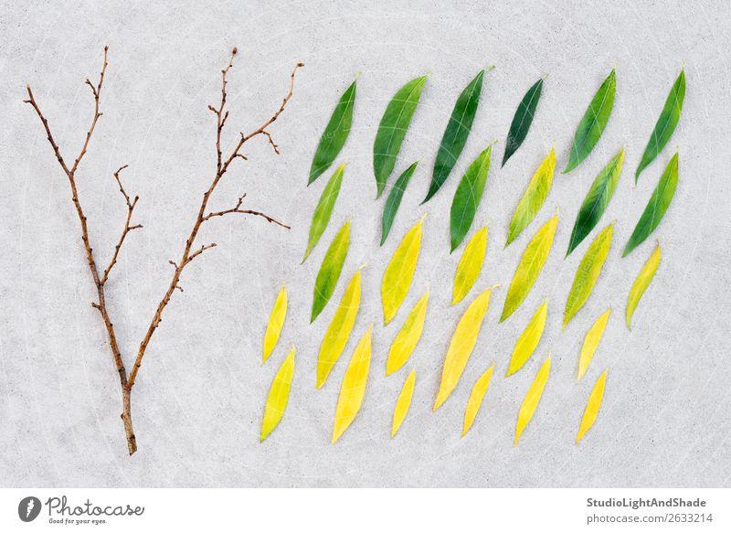 Wechsel der Jahreszeiten schön Sommer Natur Pflanze Herbst Wetter Regen Baum Blatt Wald Beton alt hell nackt natürlich gelb gold grün Farbe Inspiration