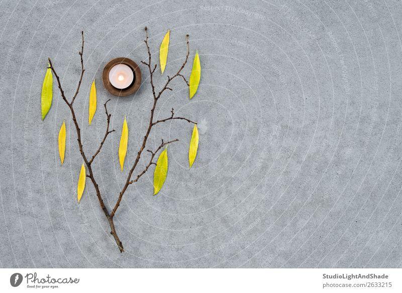 Baumzweig mit Herbstblättern und gemütlichem Kerzenlicht schön Garten Natur Wetter Wärme Blatt Beton dunkel natürlich trist gelb grau Stimmung Farbe Nostalgie