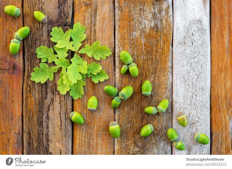 Grüne Eichenblätter und Eicheln auf rustikalem Holzgrund schön Sommer Natur Pflanze Baum Blatt Wald Sammlung natürlich retro braun grün Farbe orange jung