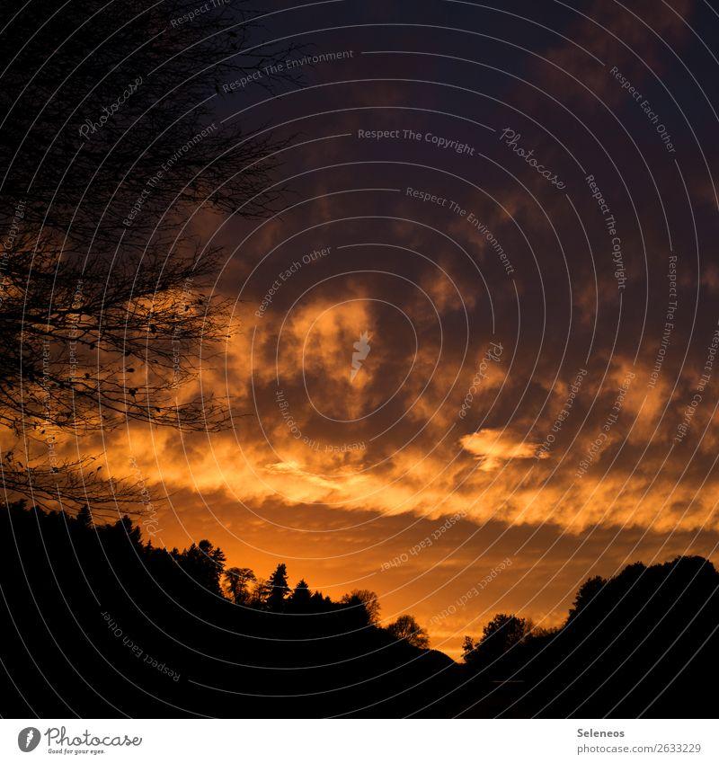 Good morning sunshine Umwelt Natur Landschaft Himmel Wolken Horizont Sonne Sonnenaufgang Sonnenuntergang Sonnenlicht Baum natürlich Farbfoto Außenaufnahme