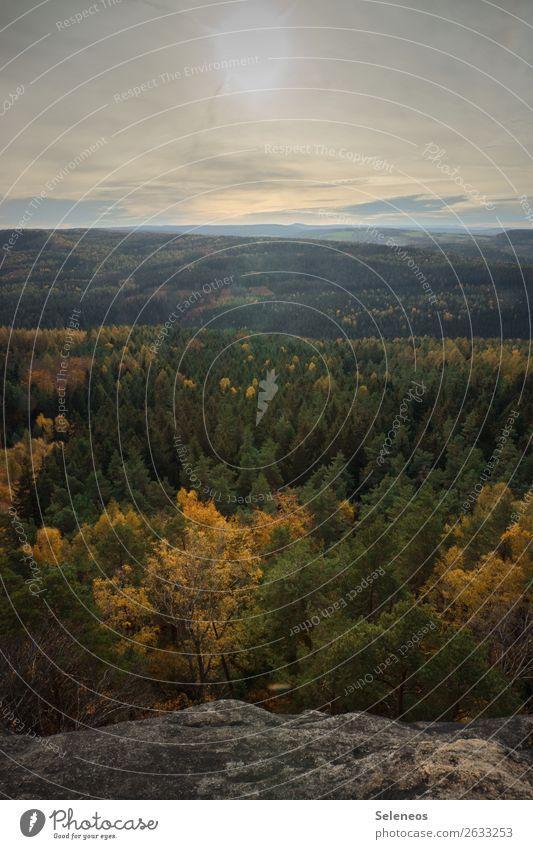 Herbstwald Himmel Natur Ferien & Urlaub & Reisen Landschaft Erholung ruhig Wald Ferne Berge u. Gebirge Umwelt Freiheit Ausflug Zufriedenheit Horizont wandern