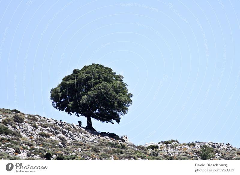 Am Rand der Welt Sommer Natur Landschaft Wolkenloser Himmel Schönes Wetter Wärme Baum Grünpflanze Hügel blau grün Einsamkeit einzeln Laubbaum hell-blau Farbfoto