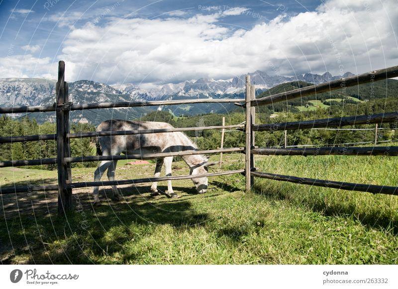Schönes Eselleben Himmel Natur Ferien & Urlaub & Reisen Tier ruhig Ferne Erholung Umwelt Landschaft Leben Wiese Berge u. Gebirge Freiheit Gras Glück träumen