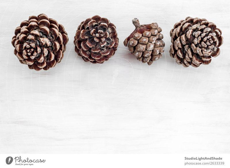 Vier Tannenzapfen auf weißem Holzgrund Stil Design Innenarchitektur Dekoration & Verzierung Tisch Natur Pflanze Baum Wildpflanze Wald einfach schön natürlich
