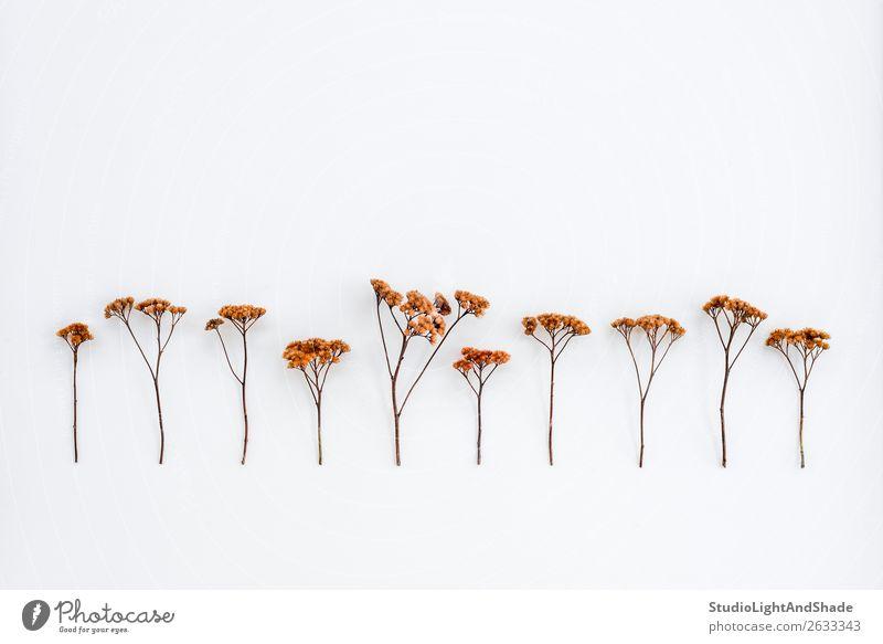 Trockenschirmpflanzen auf weißer Leinwand elegant schön Garten Gartenarbeit Natur Pflanze Herbst Baum Blume Blüte Wildpflanze Park Wald Linie einfach natürlich