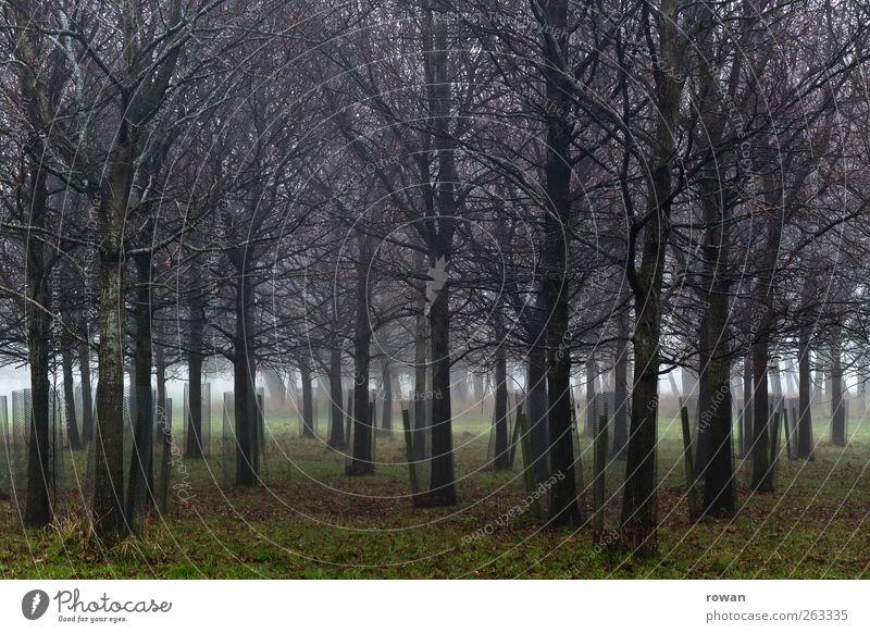 dichte Natur Baum Pflanze Winter Wald Umwelt Landschaft kalt Herbst Gras Garten Park Nebel Wachstum gruselig eng
