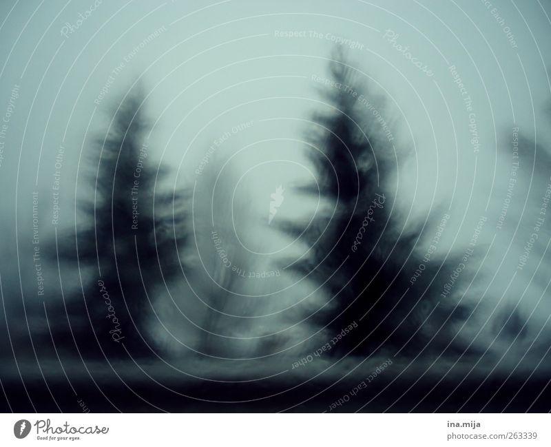 Zauberwald Natur blau Baum Winter Umwelt dunkel Schnee träumen Eis Nebel gefährlich Frost Unwetter Tanne Sturm Nostalgie