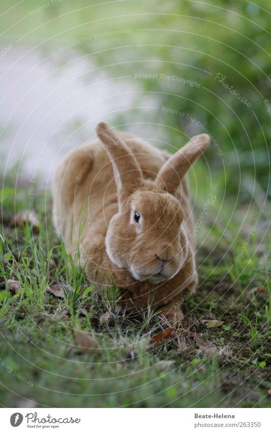 Burnout - und das vor Ostern! Natur grün schön Ferien & Urlaub & Reisen Tier träumen braun Arbeit & Erwerbstätigkeit warten ästhetisch rund weich Schutz