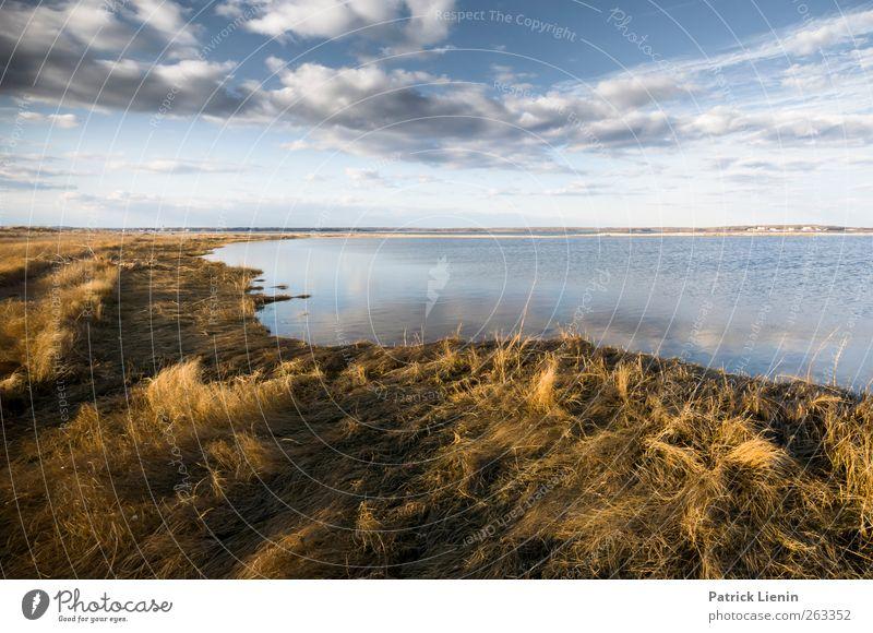 New Ceremony Umwelt Natur Landschaft Pflanze Urelemente Luft Himmel Wolken Sonnenlicht Wetter Sträucher Wildpflanze Wellen Küste Strand Bucht Meer entdecken