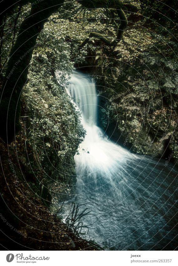 Absturz Natur blau Wasser grün Baum Sommer schwarz Wald hoch Fluss Bach Wasserfall