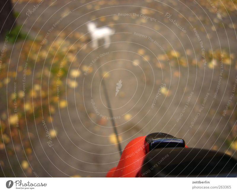 Hundi Lifestyle Übergewicht Freizeit & Hobby Ausflug Sightseeing wandern Tier 1 laufen Gassi gehen Seil Spaziergang Herbst Tierjunges auslaufen Farbfoto