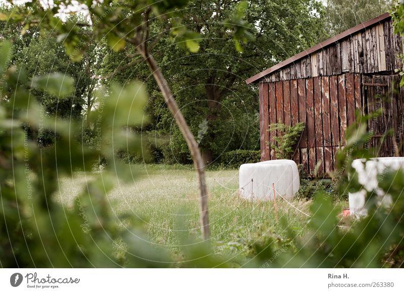 Landleben Landwirtschaft Forstwirtschaft Umwelt Natur Landschaft Pflanze Sommer Baum Gras Sträucher Feld Hütte authentisch grün Geborgenheit Scheune Heuballen