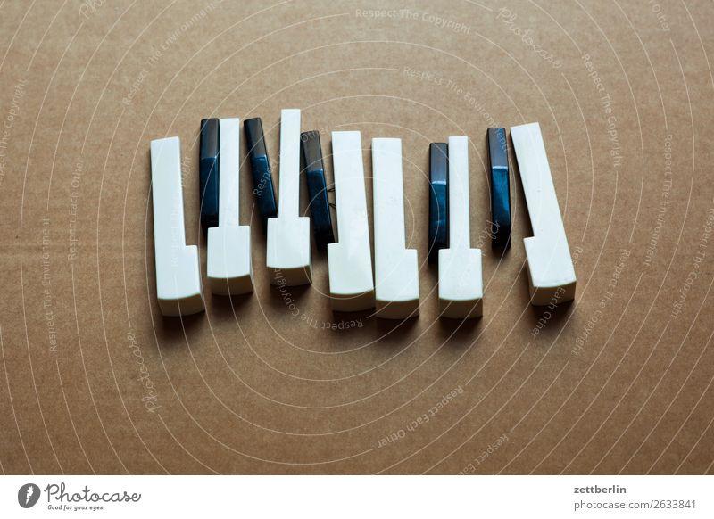 Zwölf Töne Akkord Akkordeon Detailaufnahme Musikinstrument Klaviatur Tasteninstrumente Tastsinn Tastatur Keyboard Klang Klavier Musiker Musikhit Musiknoten