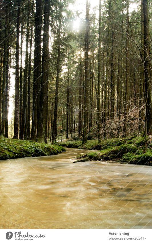 flussabwärts Umwelt Natur Landschaft Wasser Frühling Wetter Schönes Wetter Pflanze Baum Gras Sträucher Moos Grünpflanze Wald Bach Fluss dünn hell hoch braun